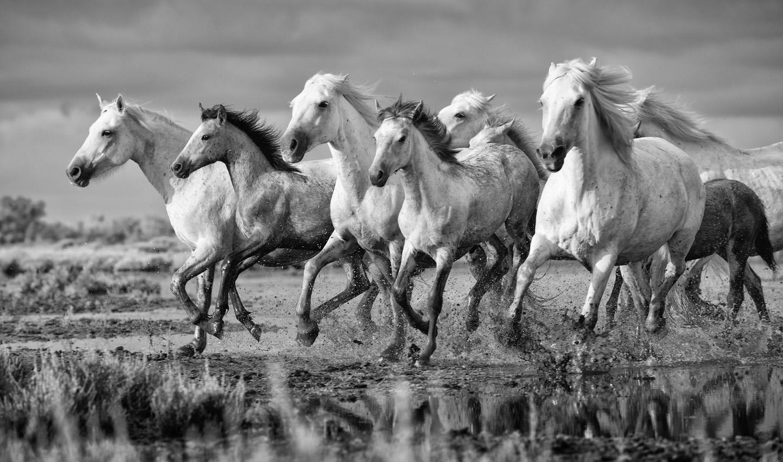 05 Camargue_Horses_SW_D8F8074-Edit