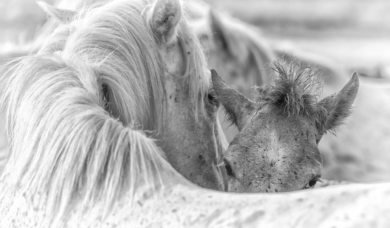08 Camargue_Horses_SW_D8F8158-Edit